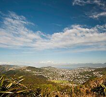 Wellington from Makara Peak by EylandImages
