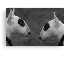 Why the Long Face ? Canvas Print