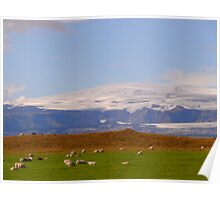Iceland: Sheep Poster