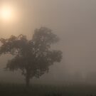 morning foggy sun by dc witmer