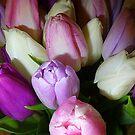 Tulips In January  by Fara