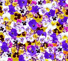 Sweet Pansy by Nefe