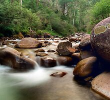 Bogong Dream by Mark  Lucey