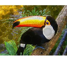 Can A Toucan Do the Can Can? Photographic Print