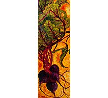 Red Beets Photographic Print