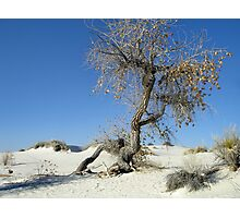 Sun Parched Photographic Print