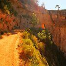 The Trail In iPad Case by ipadjohn