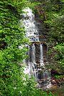 Great Ganoga Falls Through The Trees by Gene Walls
