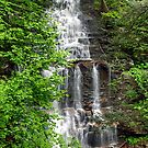Great Ganoga Falls Through The Trees by Gene Walls