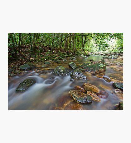 Terania Creek, Nightcap National Park, 15 March 2012. Photographic Print