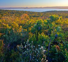Cooloola National Park, looking west over Lake Cootharaba, 11 June 2009. by Robert Ashdown