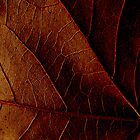 Leaf Veins by Trudi Skinn