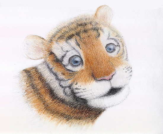 Cute Tiger Cub Portrait by Eric Fan
