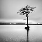 The Tree, Loch Lomond by Grant Glendinning