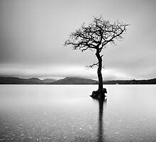 The Tree, Loch Lomond by Grant Glendinning