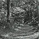 Bush track by Timothy John Keegan