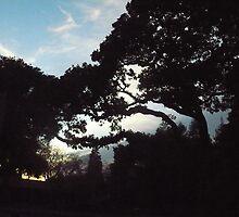 Berkeley at Sunset by Caitlan