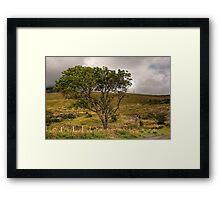 Glen Brittle Tree Framed Print