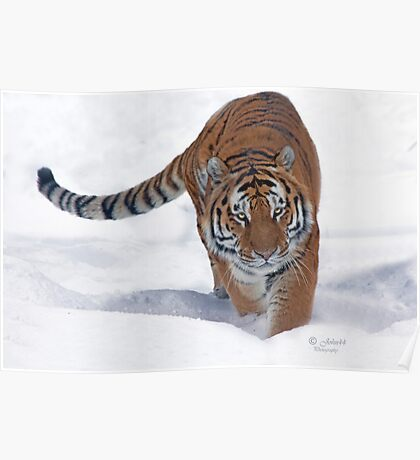 His Majesty the Siberian Tiger Poster
