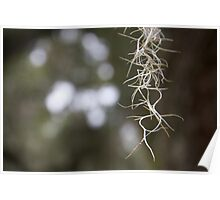 Spanish Moss Poster