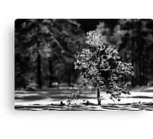 12.1.2013: Tree, Frost and Sunlight Canvas Print