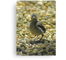 """""""I Don't Care""""  Chick Card Canvas Print"""