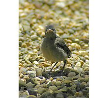 """""""I Don't Care""""  Chick Card Photographic Print"""