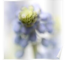 Grape Hyacinth III (abstraction) Poster