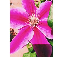Bright Pink Flower Close Up Photographic Print