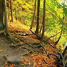 Linear Park by Irondequoit Creek by Lisa Cook