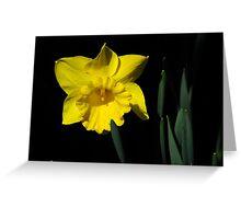 The Daffodil Greeting Card