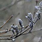 a morning freeze~ by Brandi Burdick