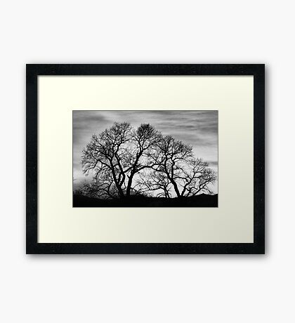 Dancing Forest Trees In Black and White Framed Print