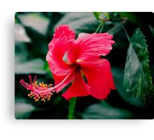 Pink Passion Canvas Print