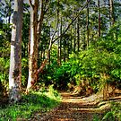 bush trail by mrobertson7