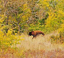 Fall walk by bamorris