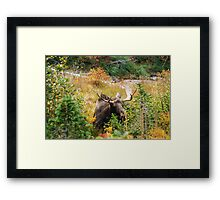Bully Framed Print