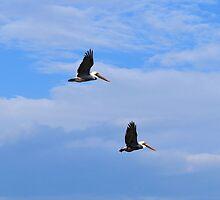 In Flight Together 1 by ©Dawne M. Dunton