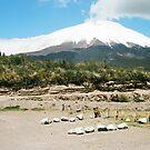 Volcano Cotopaxi  by borjoz