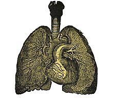 Heart & lungs Photographic Print