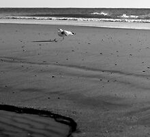 Seagull by the Sea by Speculum Anima Photography