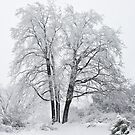 Snowy Tree by foremanphotos