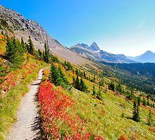 Luscious Trail  by bamorris