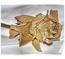 Faded Rose From Days Gone By Poster