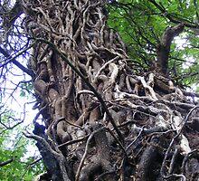 Tree at Ninesprings, UK by Sad-Robot