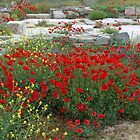 Red Poppies, Island of Delos, Greece by DMRPhotos