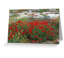 Red Poppies, Island of Delos, Greece Greeting Card
