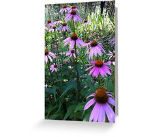 Echinacea, Grass Valley, CA Greeting Card
