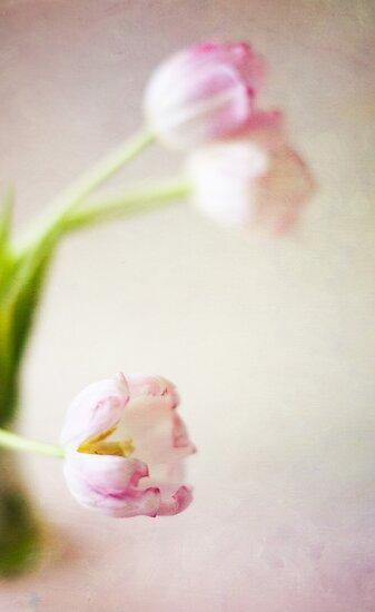 Lone Tulip  by Nicola  Pearson