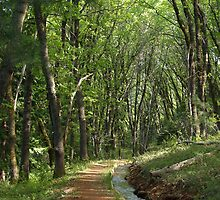 Ditch Trail - Grass Valley, California by DMRPhotos
